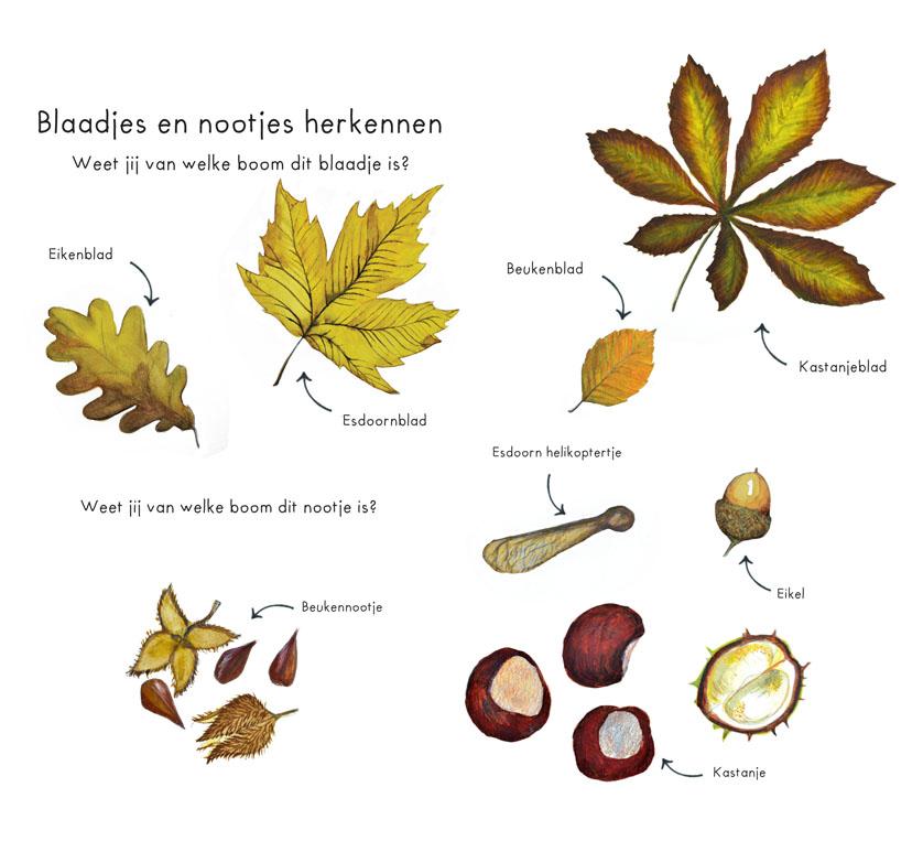Leuke dingen in de Herfst illustraties